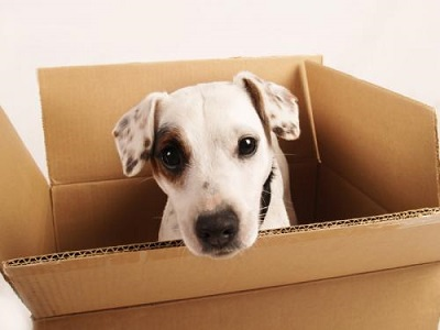 tips of moving with pet 1